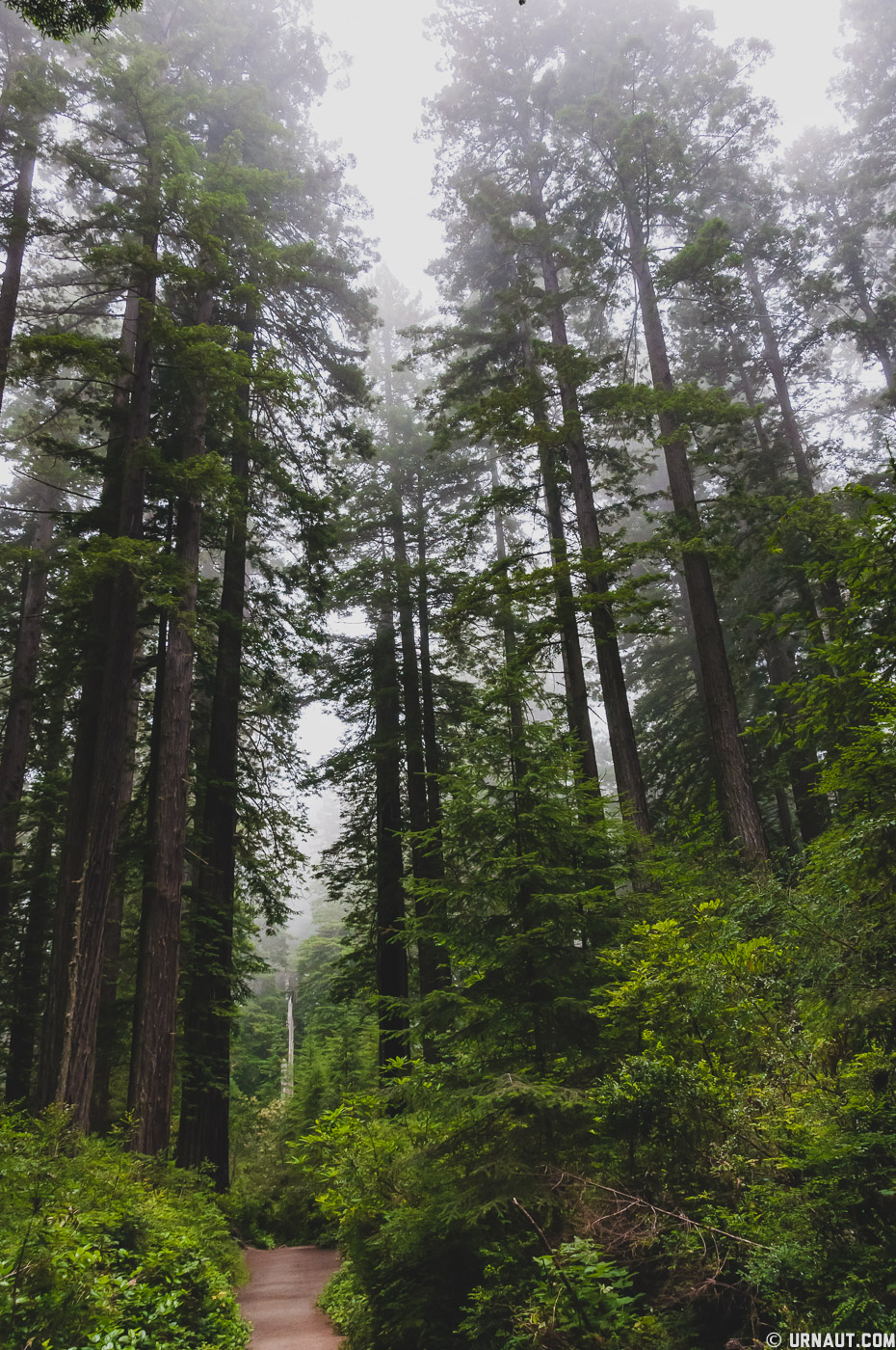 0149-Redwoods.jpg