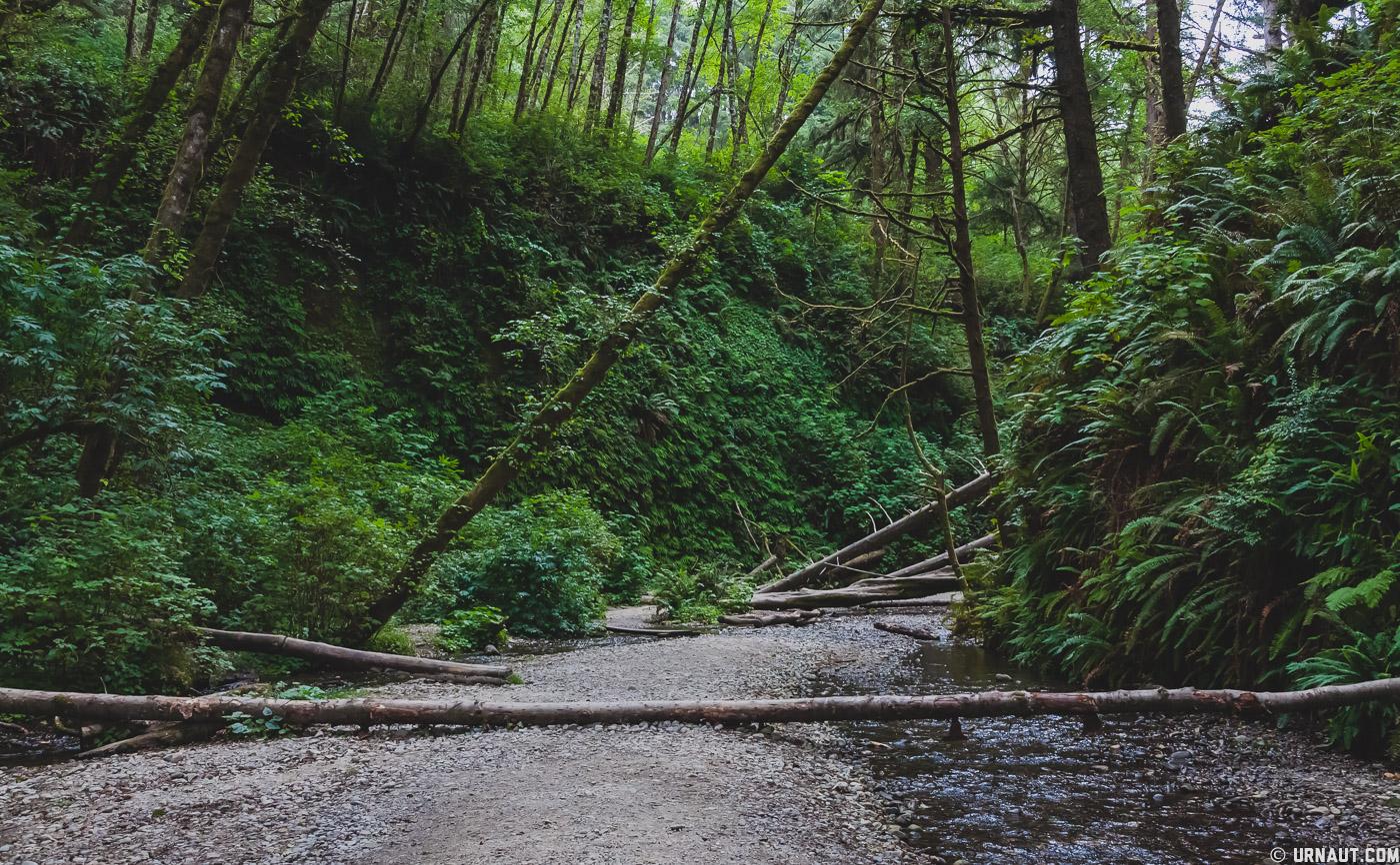 0153-Redwoods.jpg